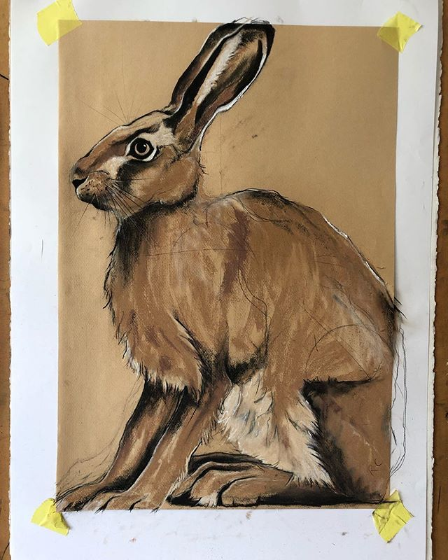Another mad hare study today. I am loving drawing hare's, their strange proportions and innate personalities I am finding extremely appealing to draw. #hare #britishwildlife #wildcreatures #hforhare