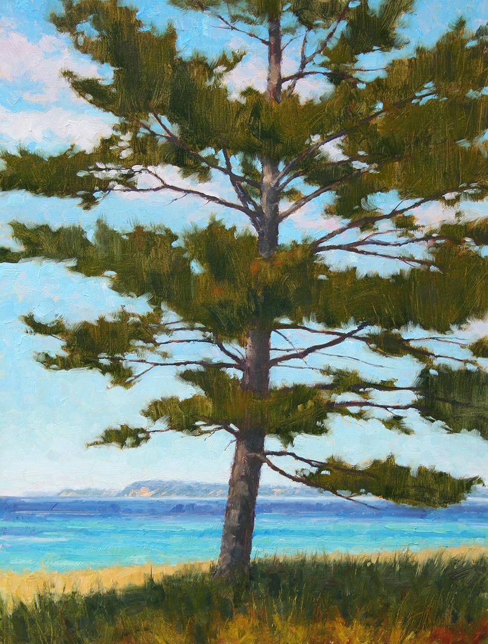 Pine at Good Harbor
