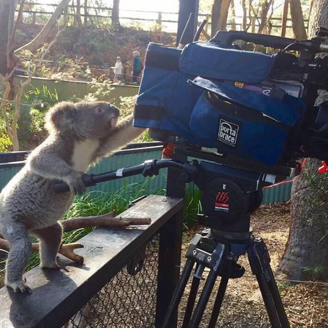 Just pan a bit to the right Barry.. Our new #cameraman