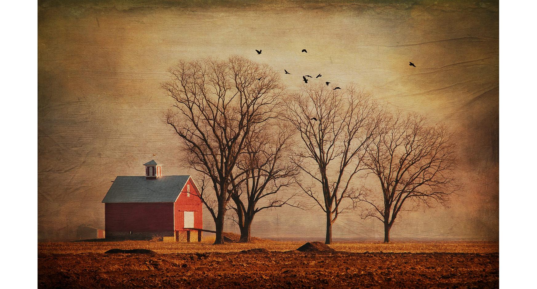 Morning Farm