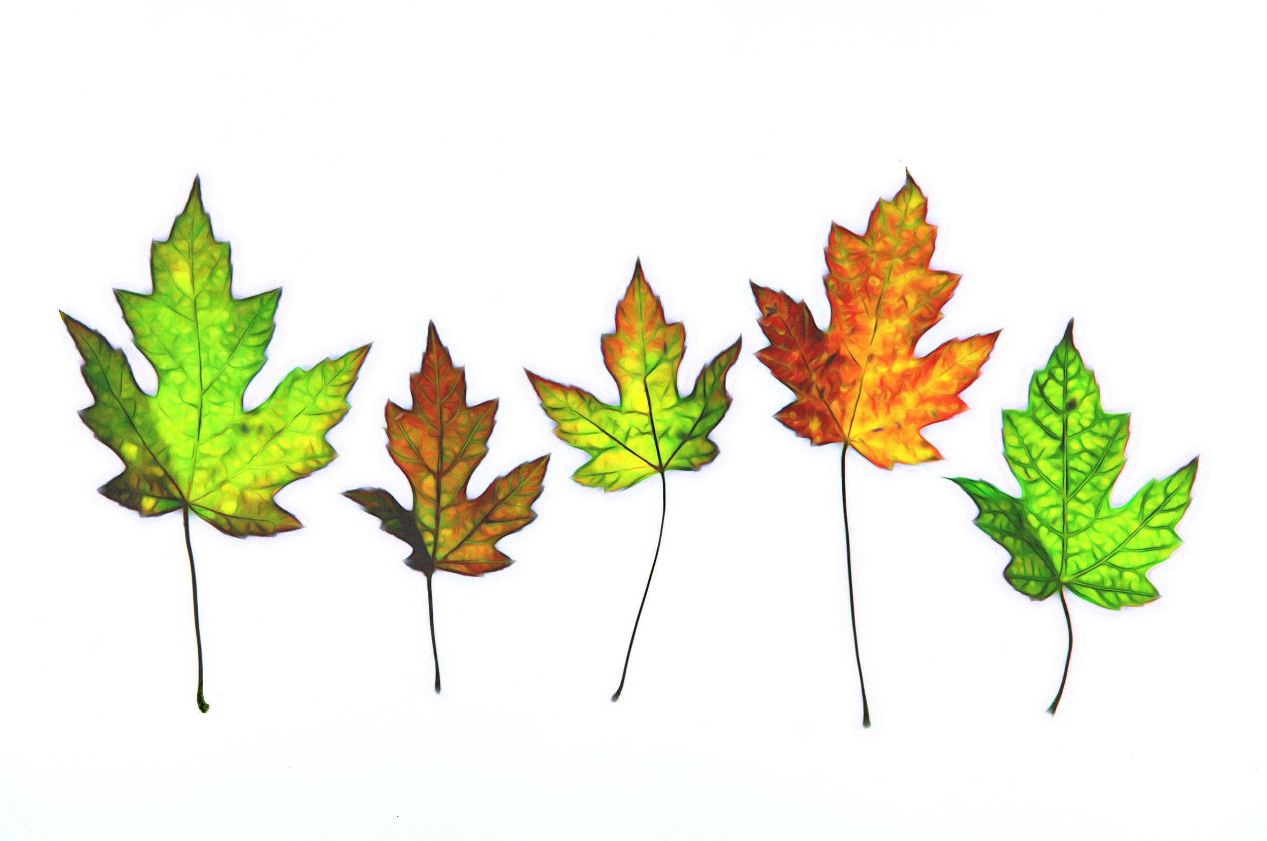 Leaf Lineup sm.jpg