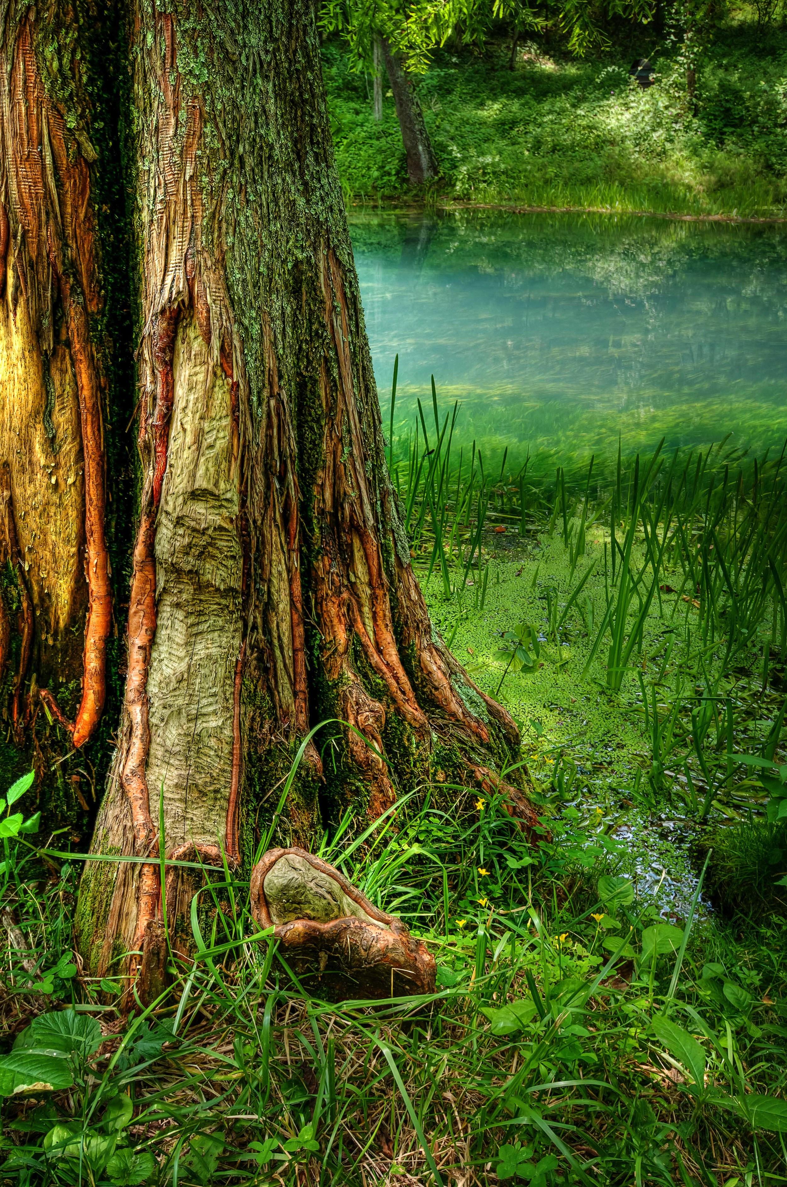 Like a Tree.jpg