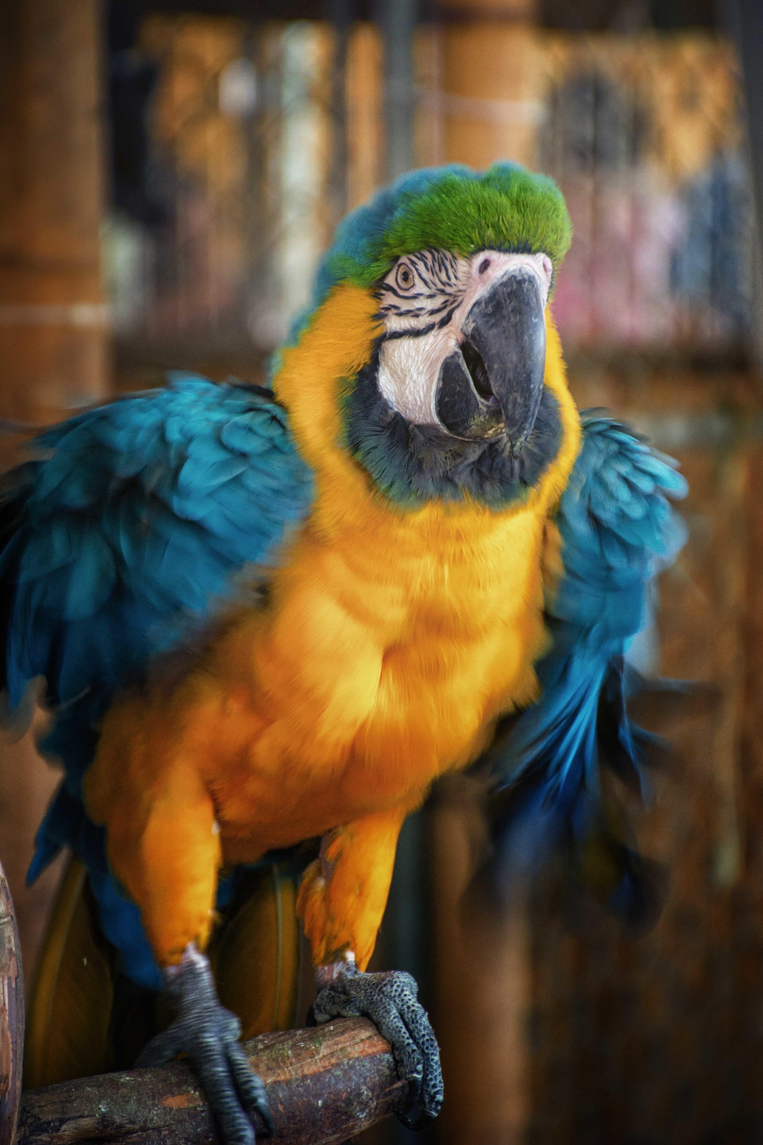 pretty bird sm.jpg