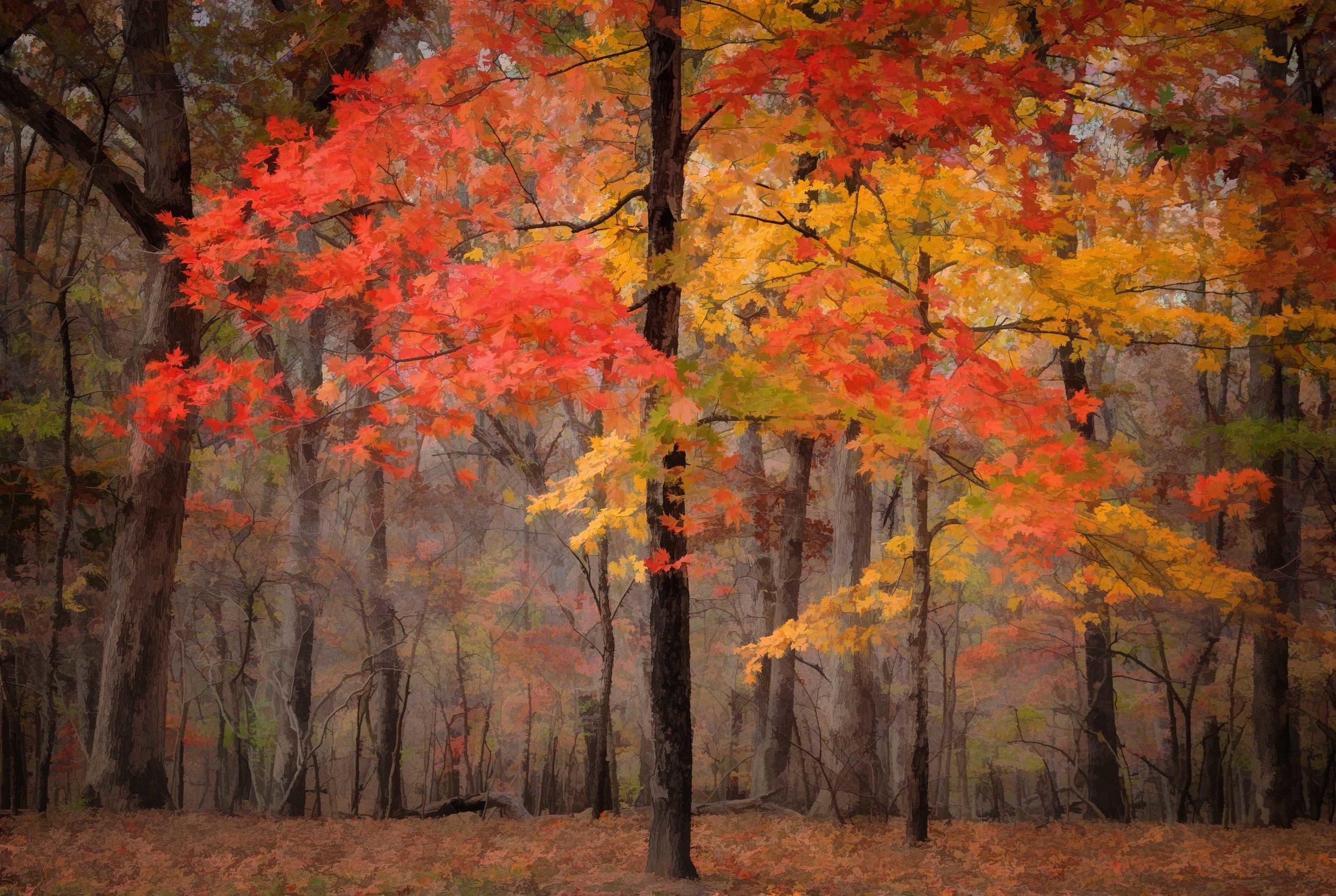 beautiful maples sm.jpg