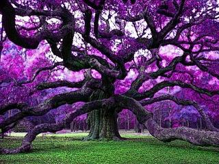 Angel Oak A (3).jpeg