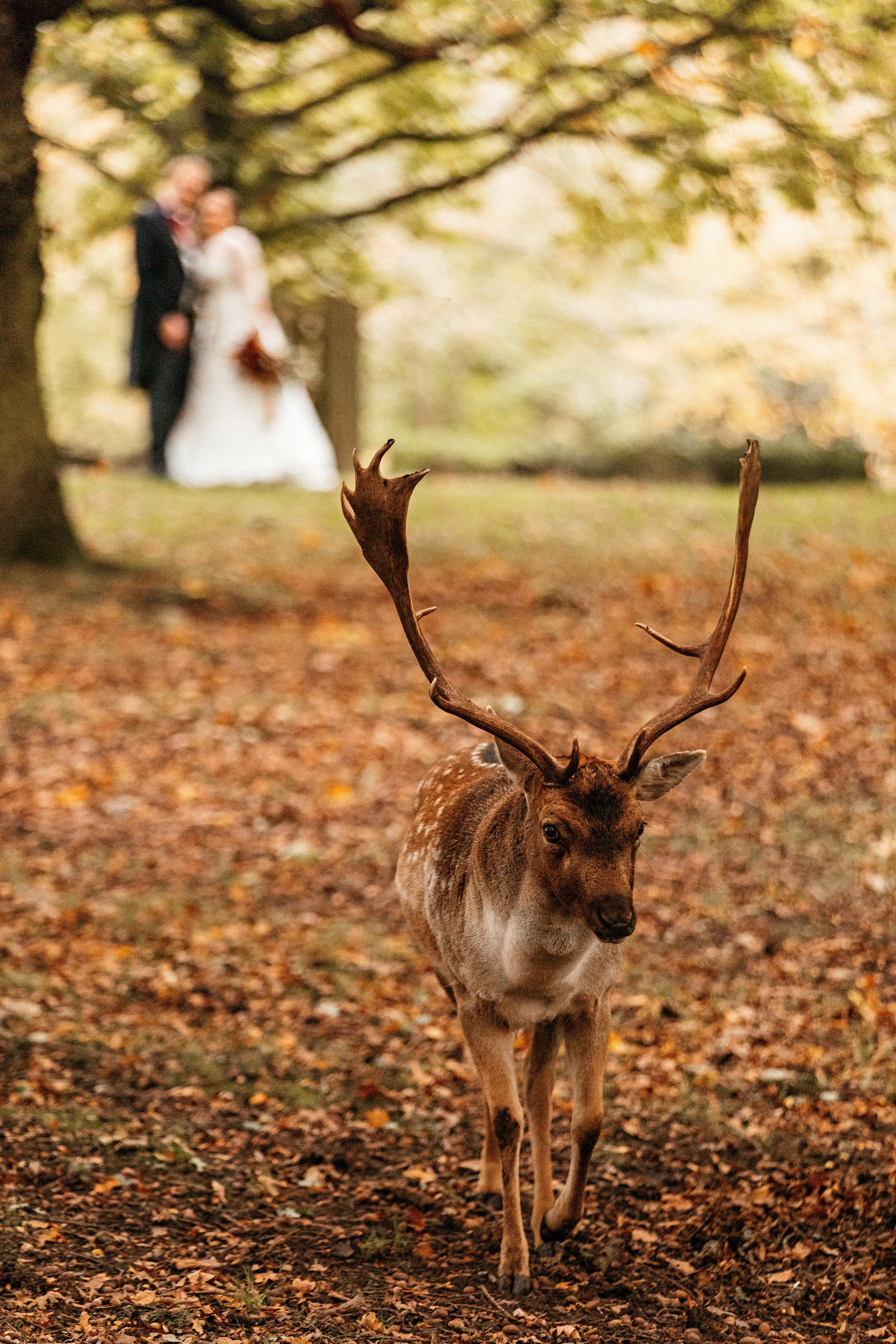 Dunham-Massey-Wedding-Photographer-92.jpg