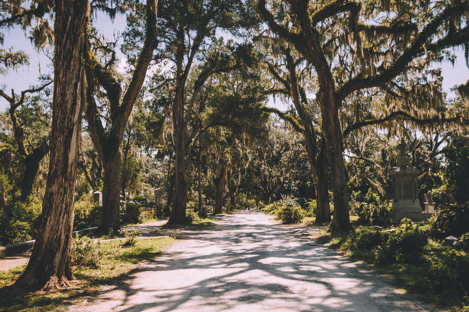 savannah_forblog-15.jpg