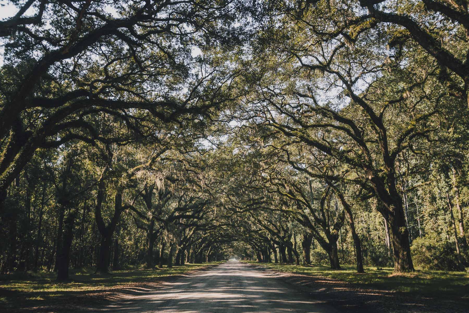savannah_forblog-25.jpg