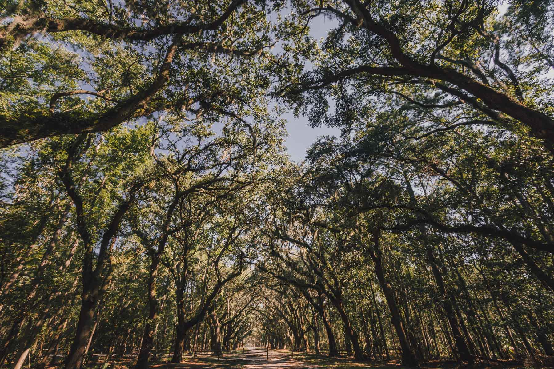 savannah_forblog-26.jpg