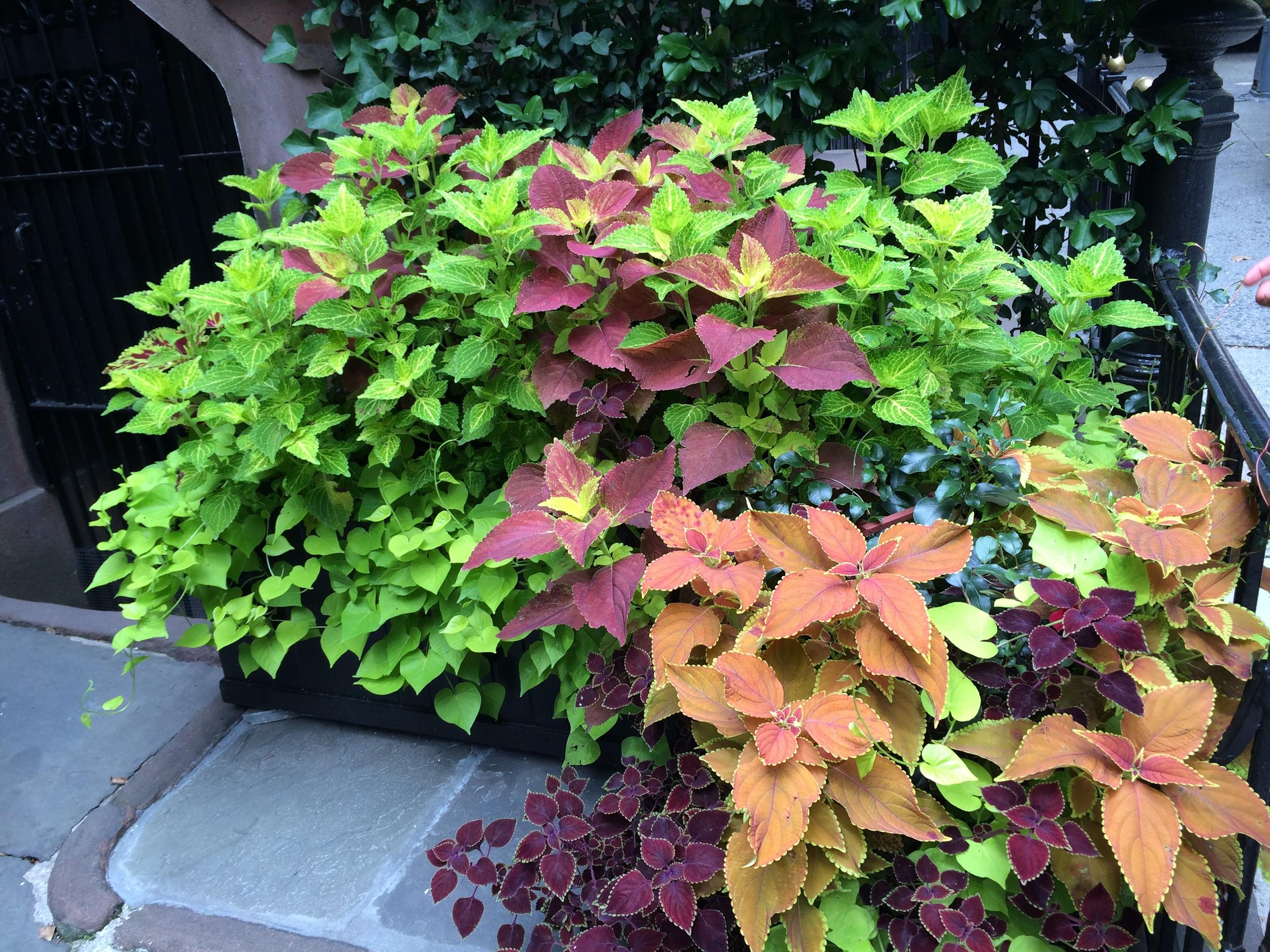 Manhattan terrace garden.