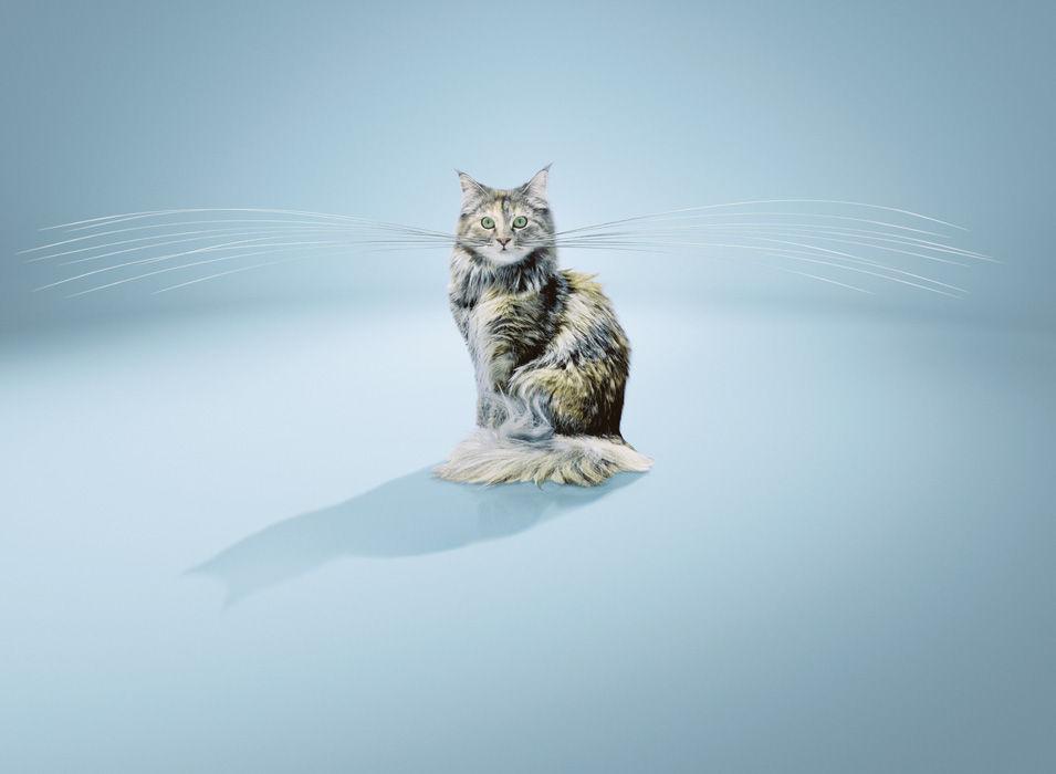 imagefactory-1.jpeg