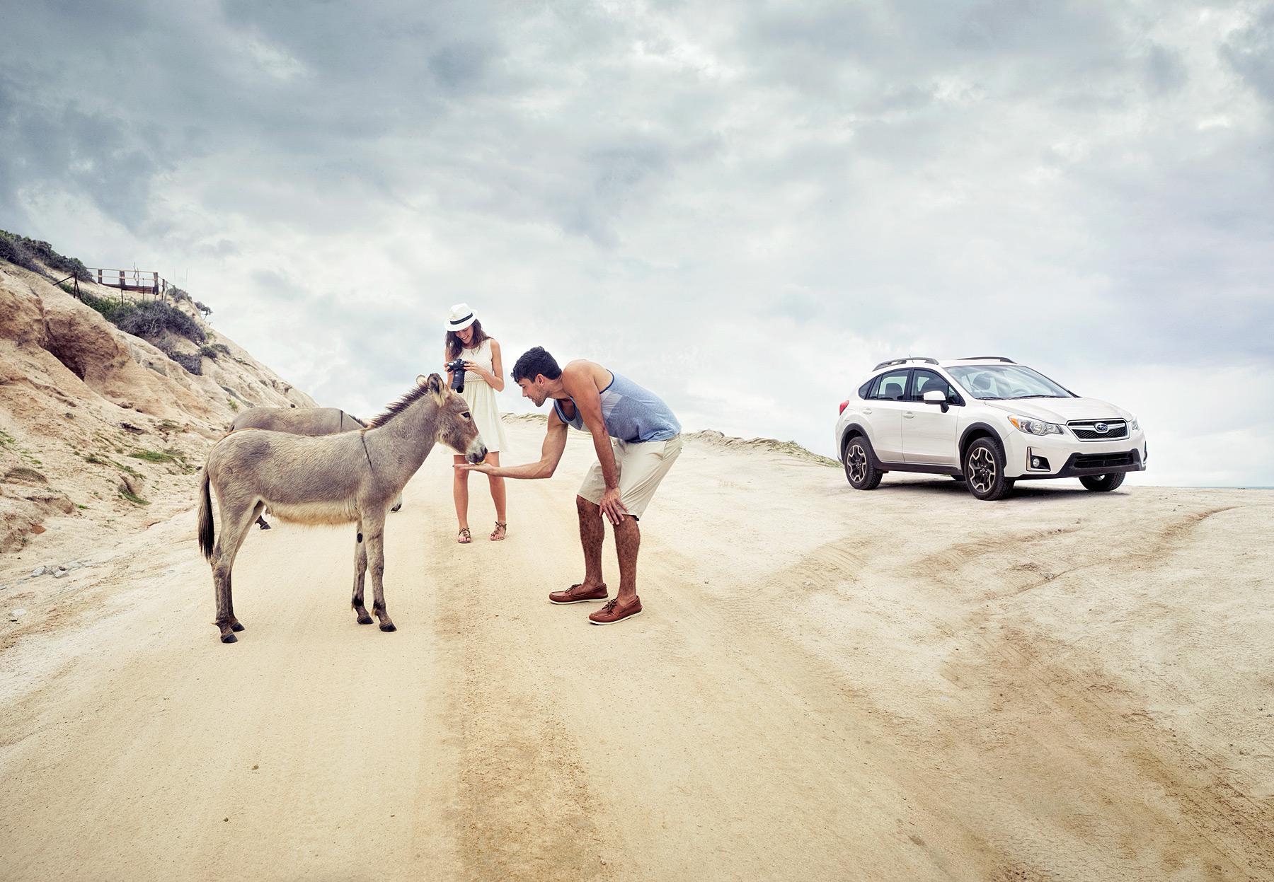 NHP_Subaru_Donkeys_COMP01_FED_Nick_v1.jpg