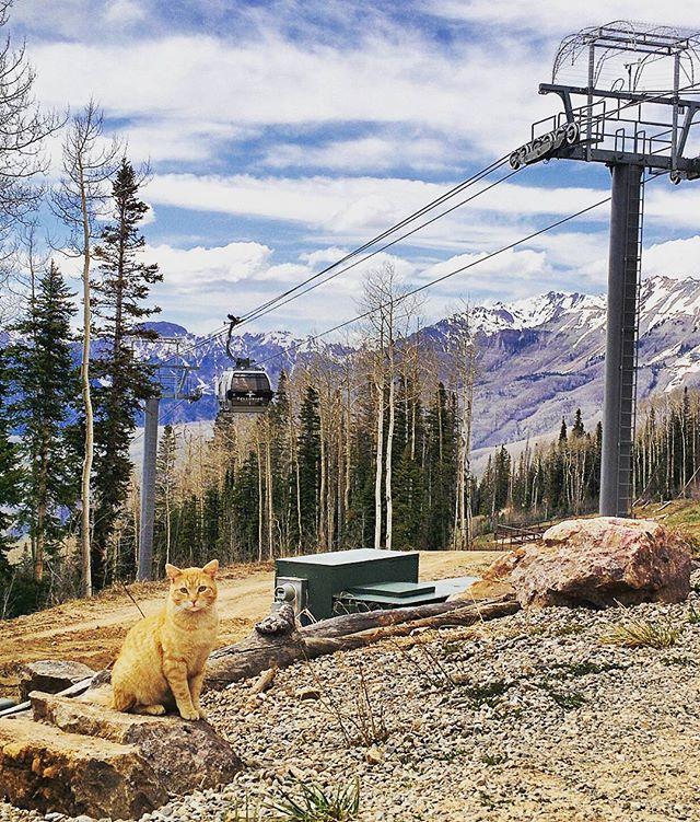 "Sampson, the ""Angle Station"" gondola cat at 10,540 feet. #telluride #mountainvillage #gondola"