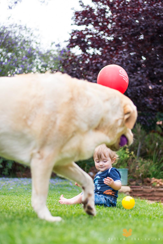 yellow-lab-balloon2.jpg