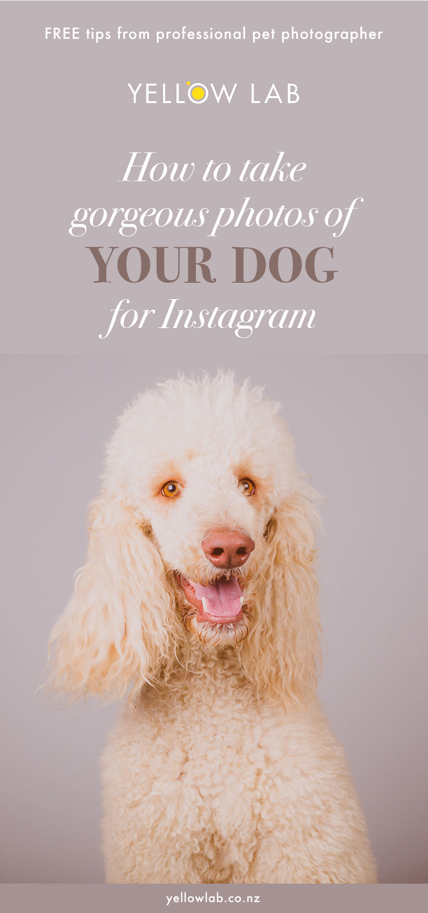 Blog post on Patter Paws - Up your instagame today ;-)