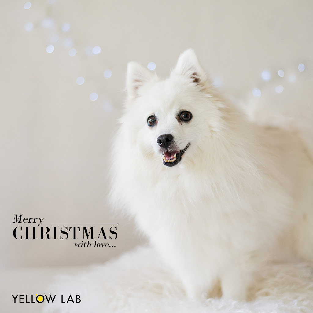 yellowlabxmas17.jpg