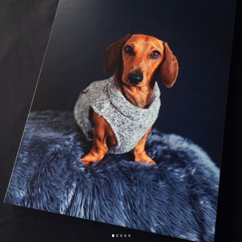 gift idea for dog lover auckland