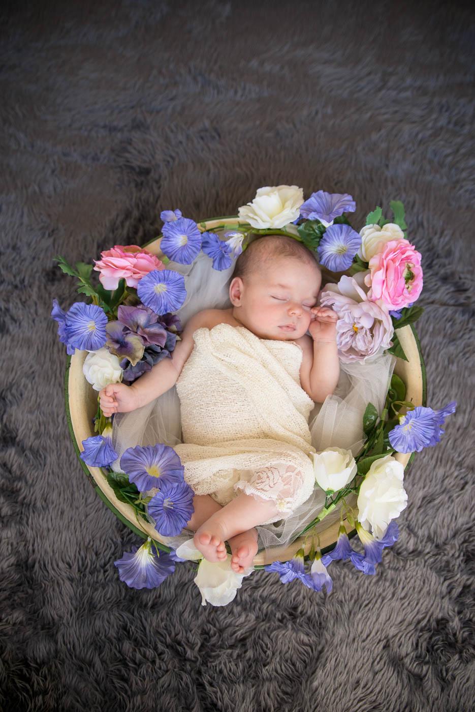 newborn photographer auckland