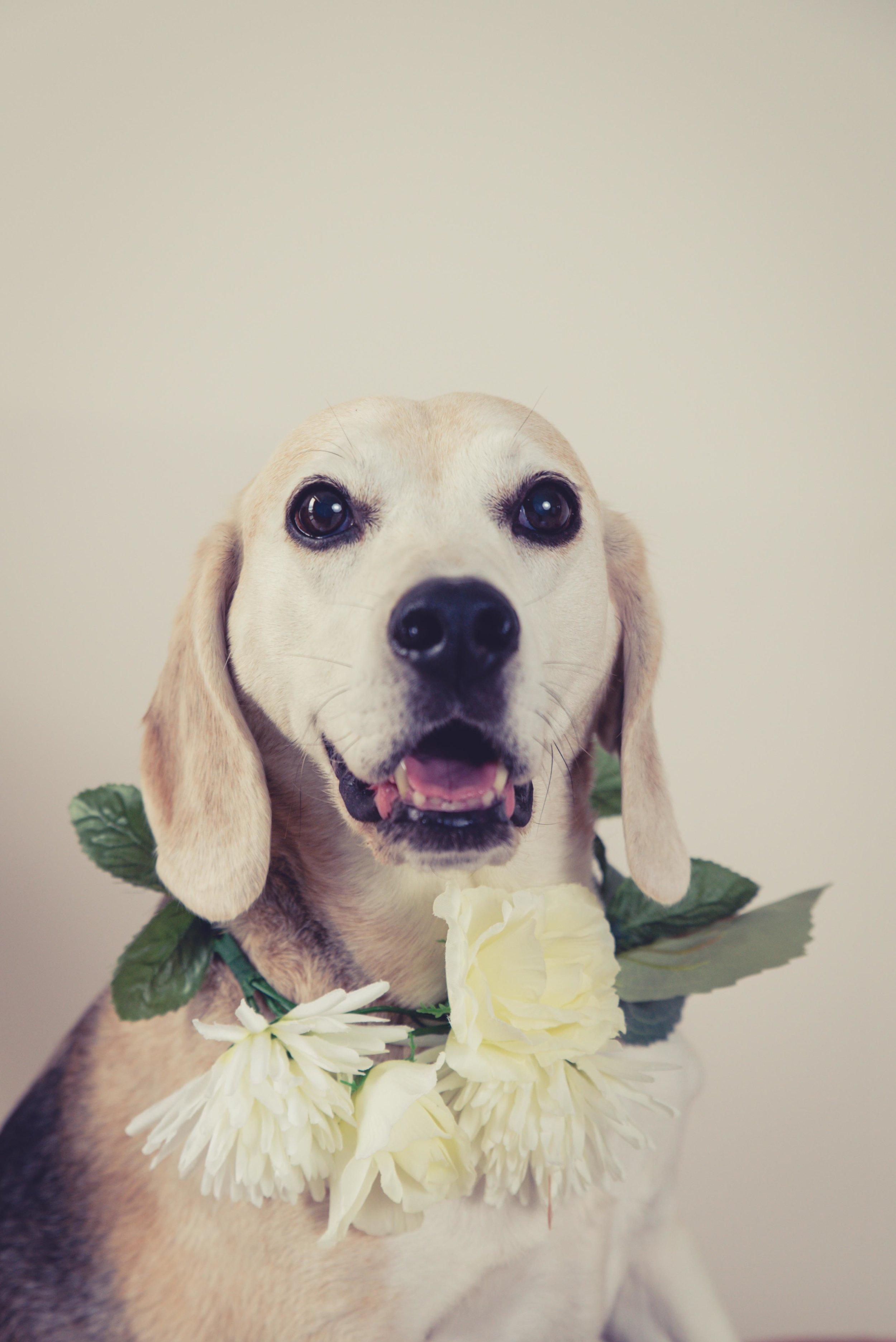 dogwithflowerspetphoto