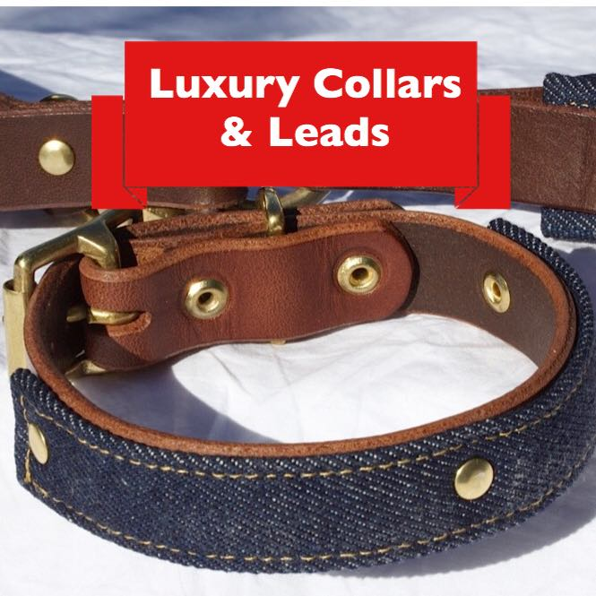 collars and leads.jpg