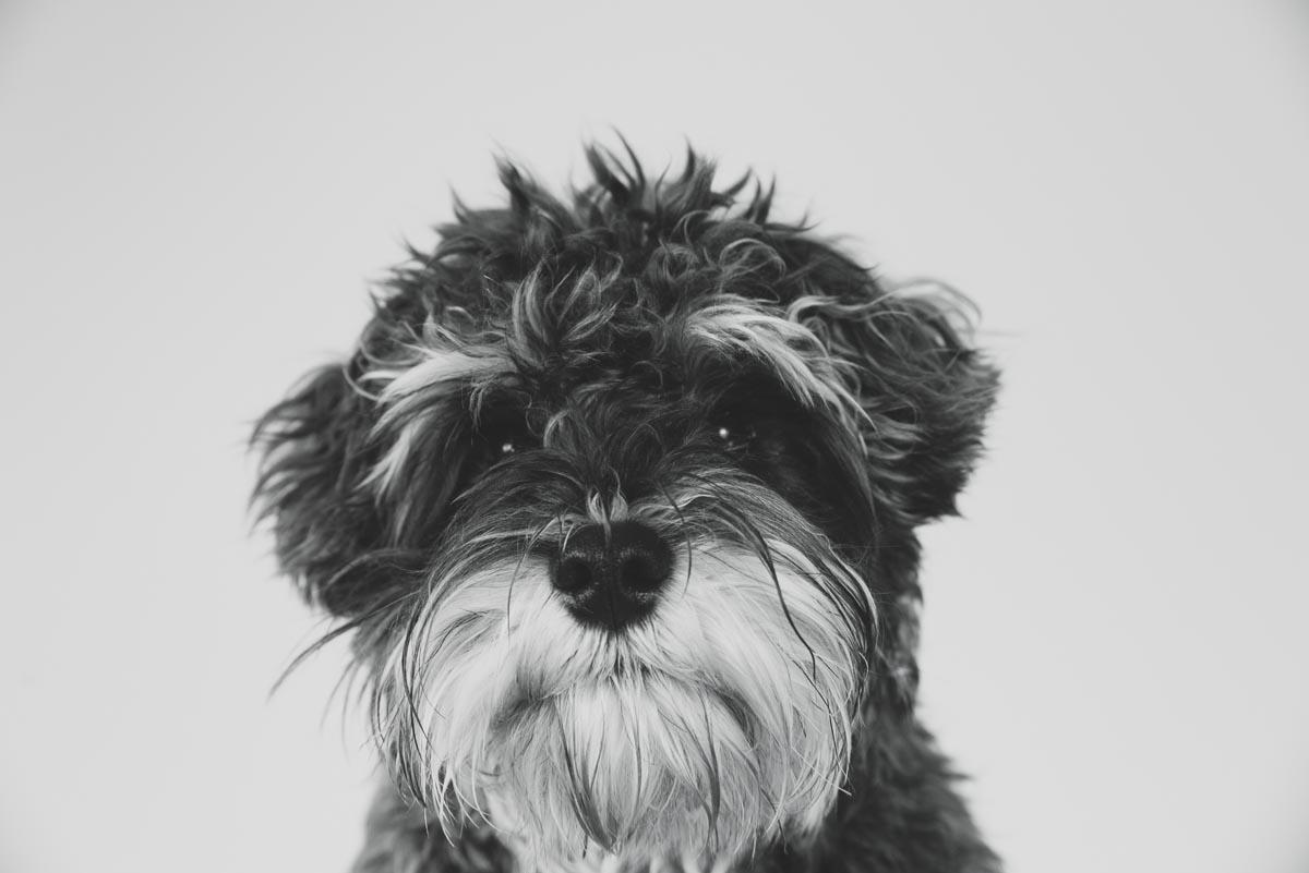 dogphotographerauckland