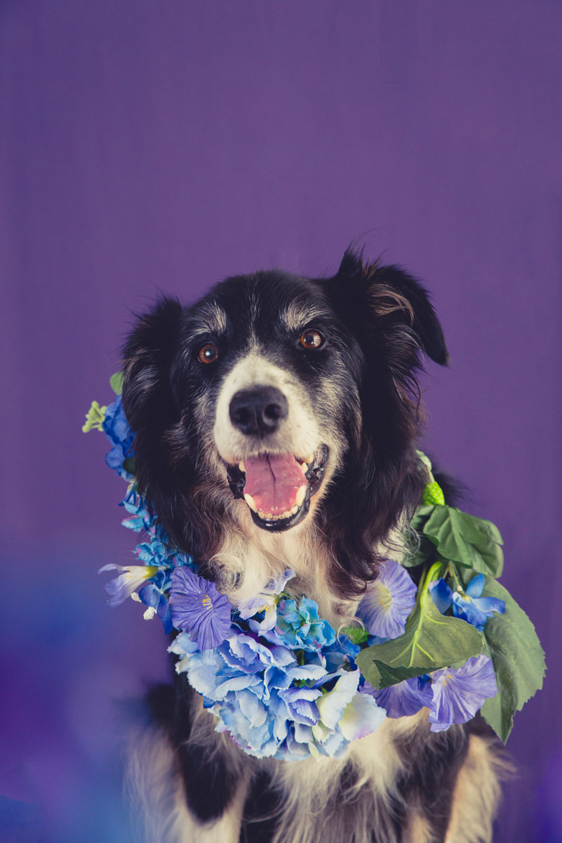 dog with flower photographer auckland