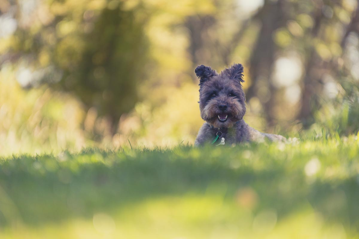 dog photo auckland