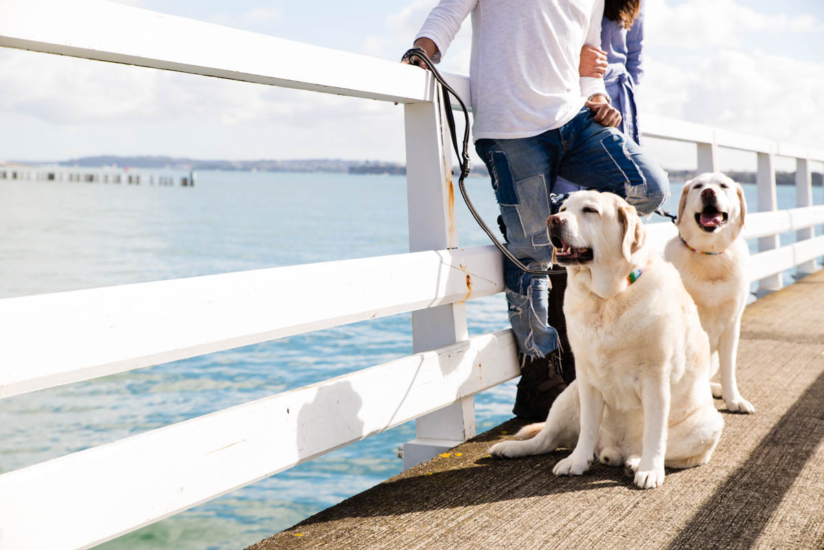 auckland dog photographer