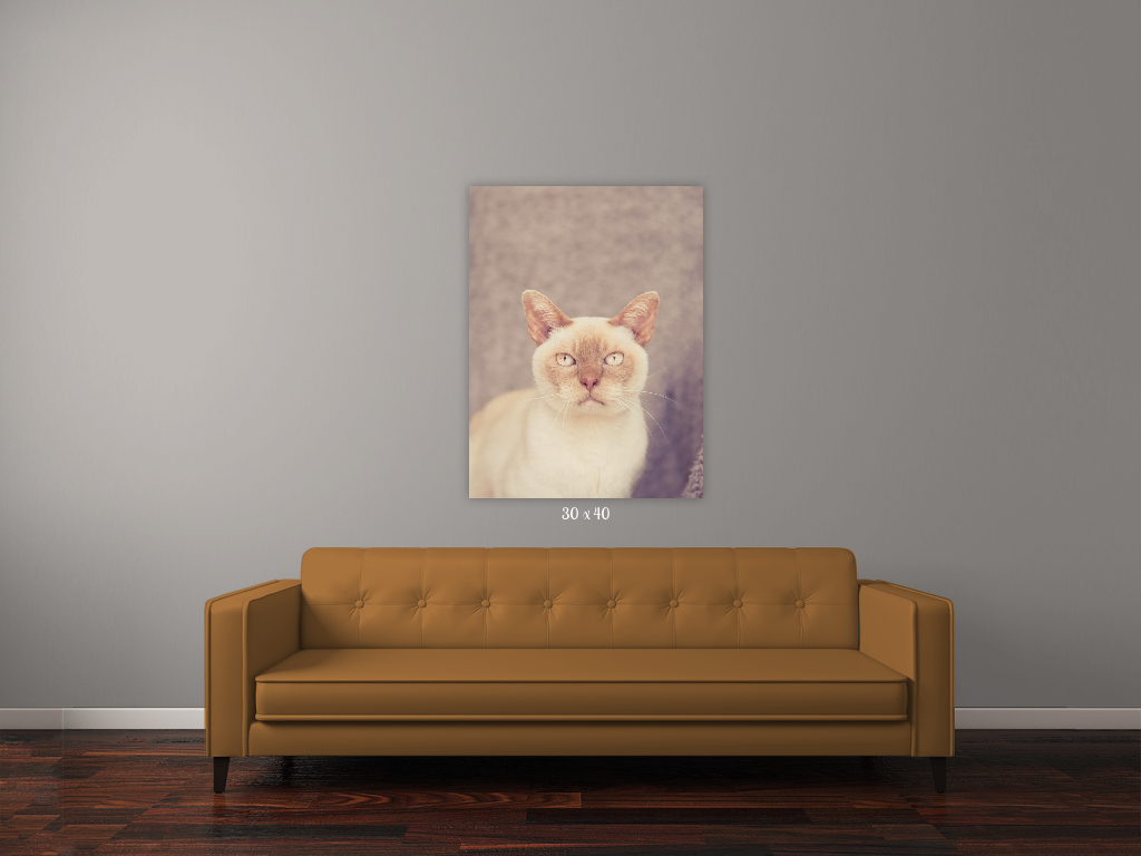 cat photographer auckland, cat photography auckland, auckland photographer, gift idea for animal lover, pet photoshoot, cat wall art, cat photo on wall, yellow lab pet photo