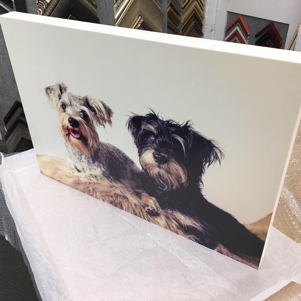 dog lover gift idea