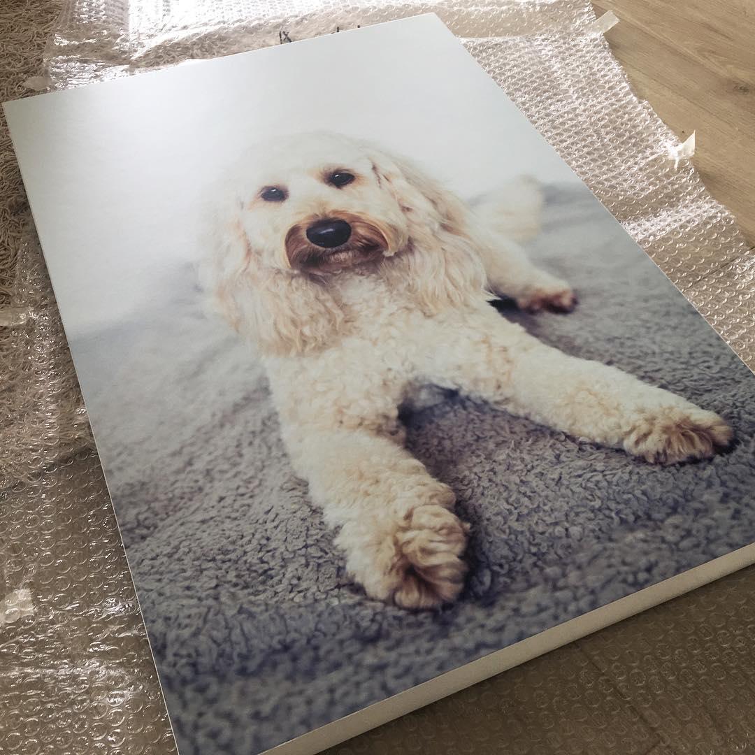 dog photographer new zealand