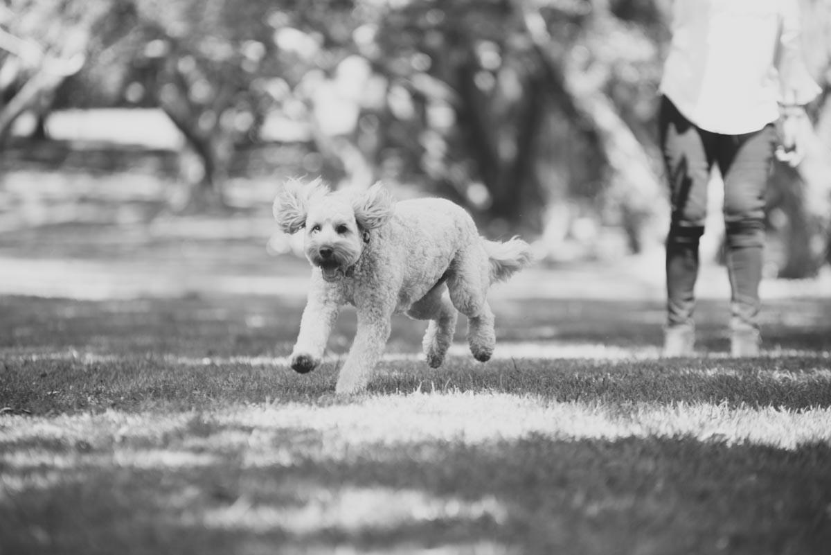 on location dog photographer auckland
