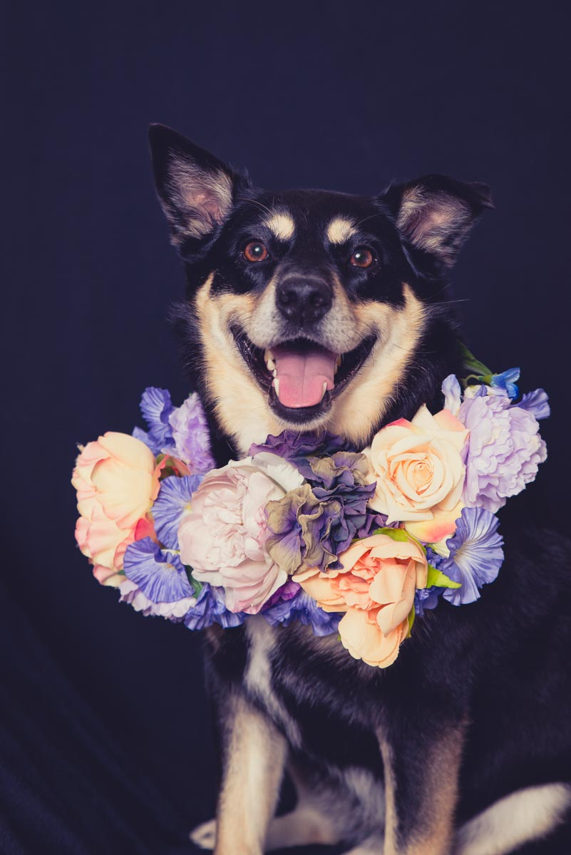 dog with flowers photo