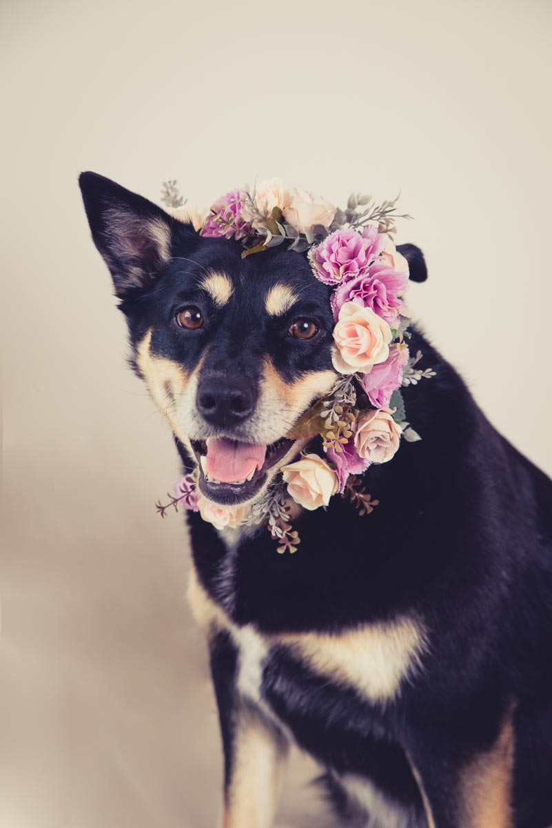 dog with flower crown photographer