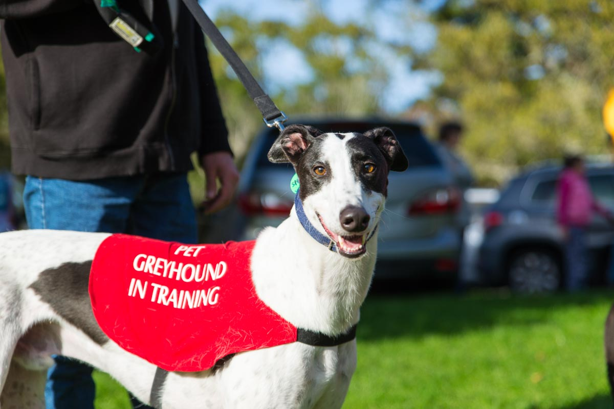 greyhoundphotographer web (20 of 71).jpg