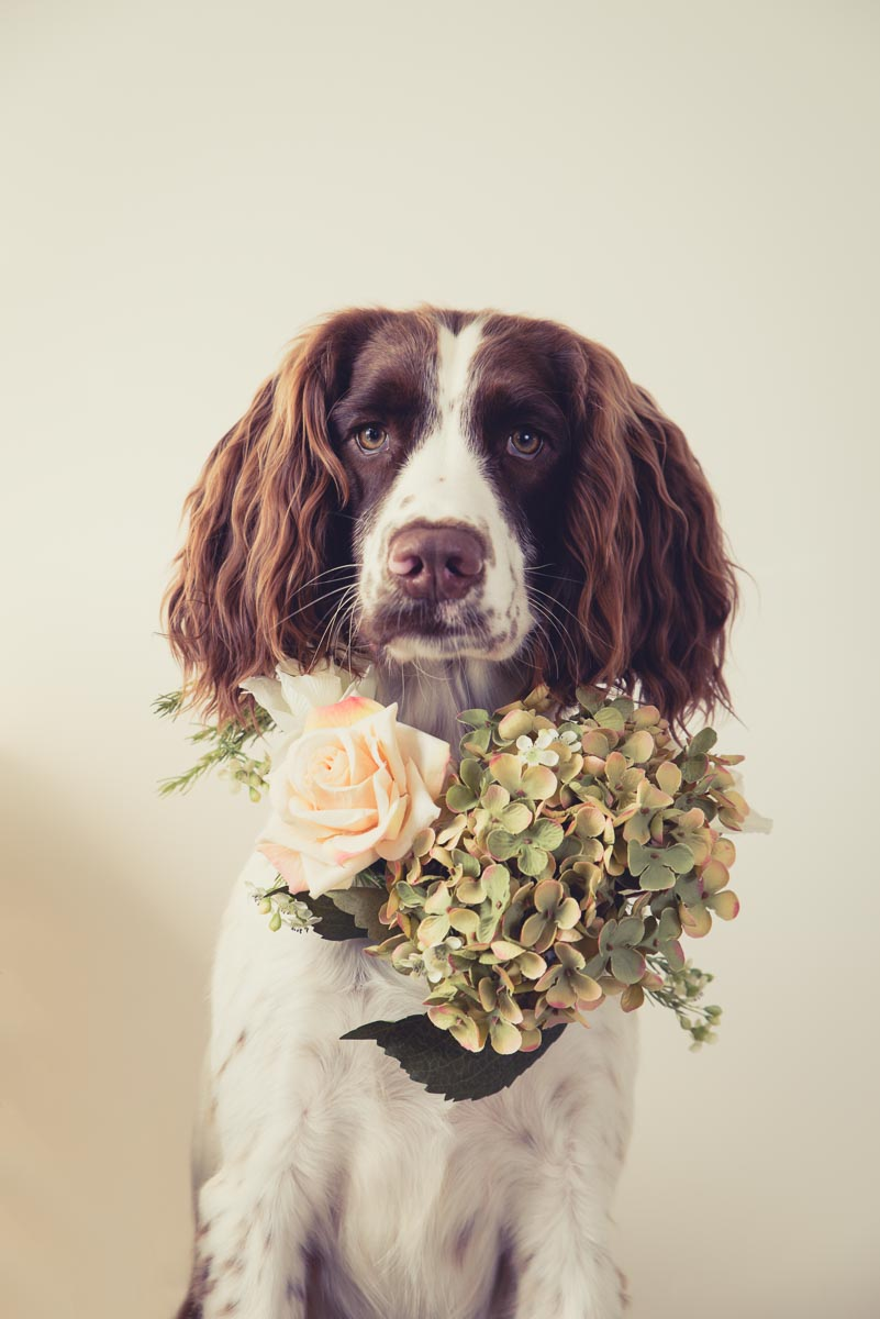 flower dog photographer