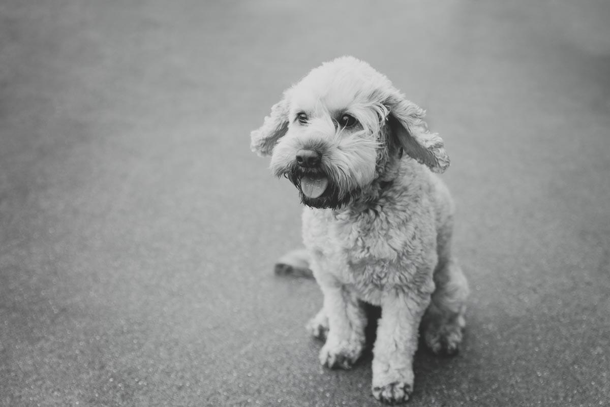 dog photography auckland