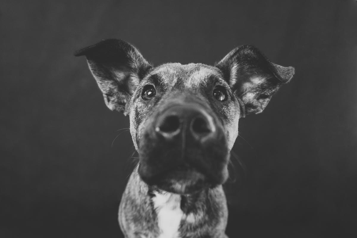 black and white dog photography auckland