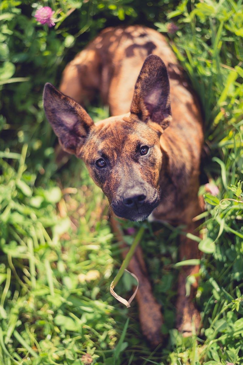 on location pet photographer near auckland