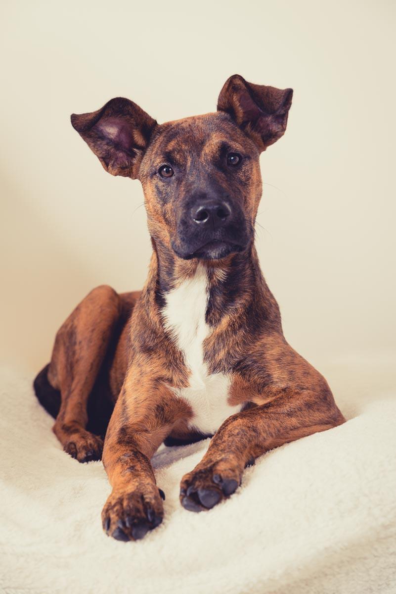 dog portrait near auckland photography
