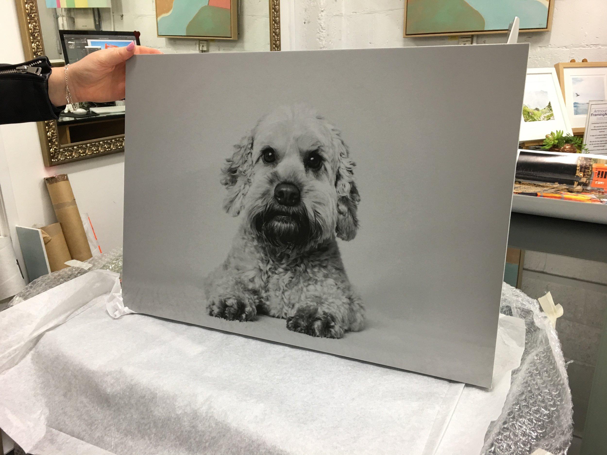 dog wall art auckland