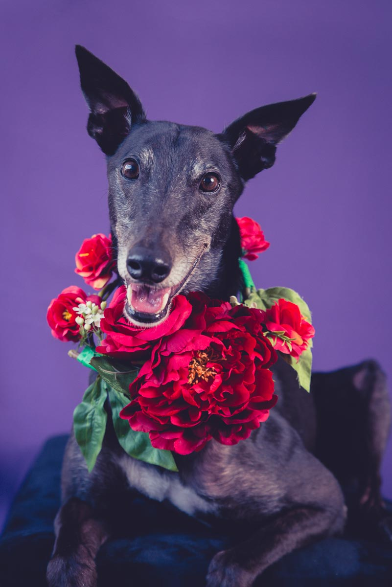 dog with flowers photography