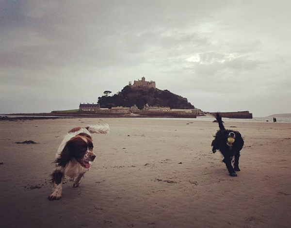 7. Hone Your Instagram Skills - Marazion is picturesque, there's no doubt about that. The marazion tag on Instagram is a testament to that  instagram.com/explore/tags/marazionThe town, the beach and it's surroundings are great for photographic inspiration; bring your dogs to complete the scene! Picture Credit: instagram.com/kren77