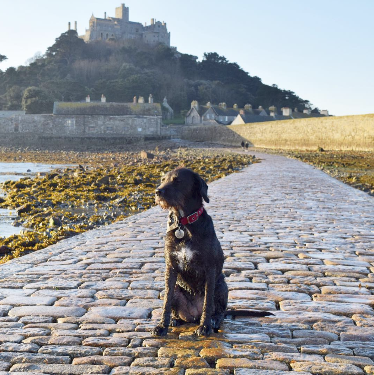 You are allowed to walk across the Causeway to St Michaels Mount at low tide with your dog. -