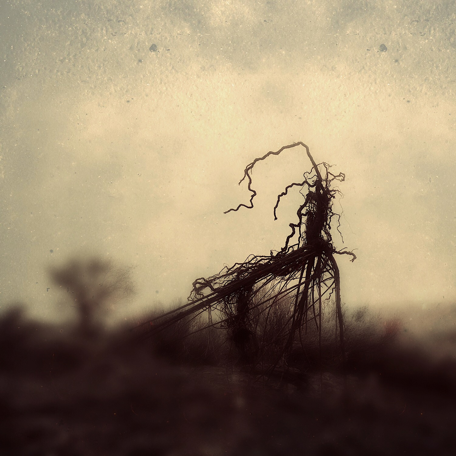 uprooted | migrant