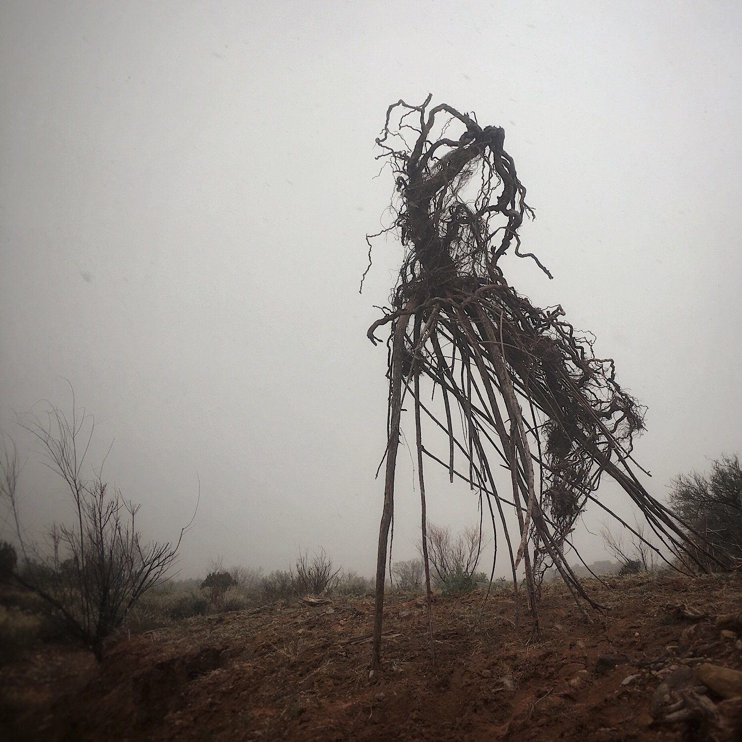 uprooted | stand