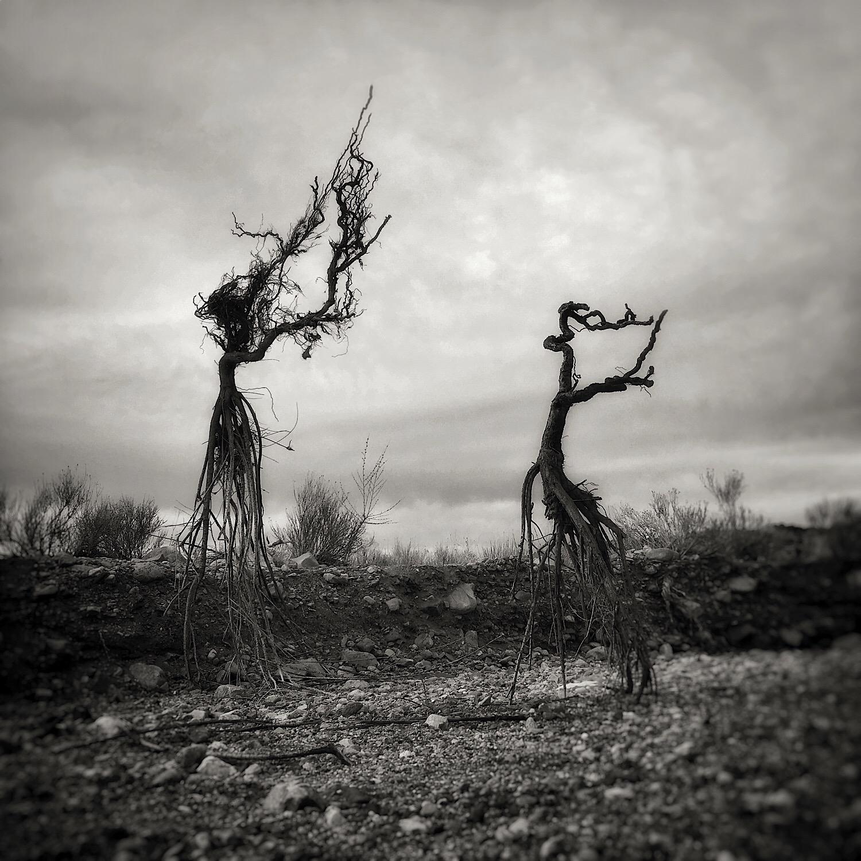 uprooted | tango