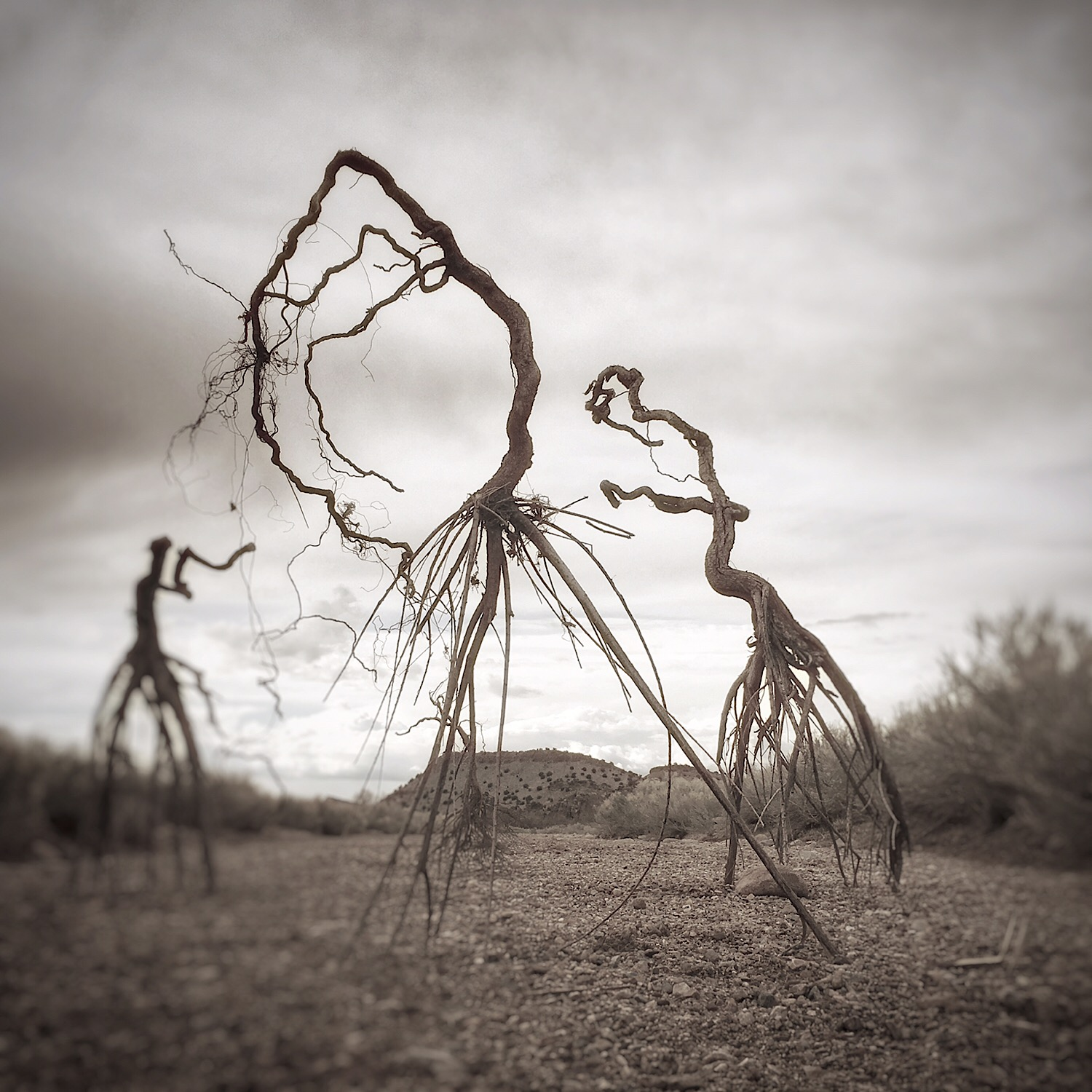 uprooted | family