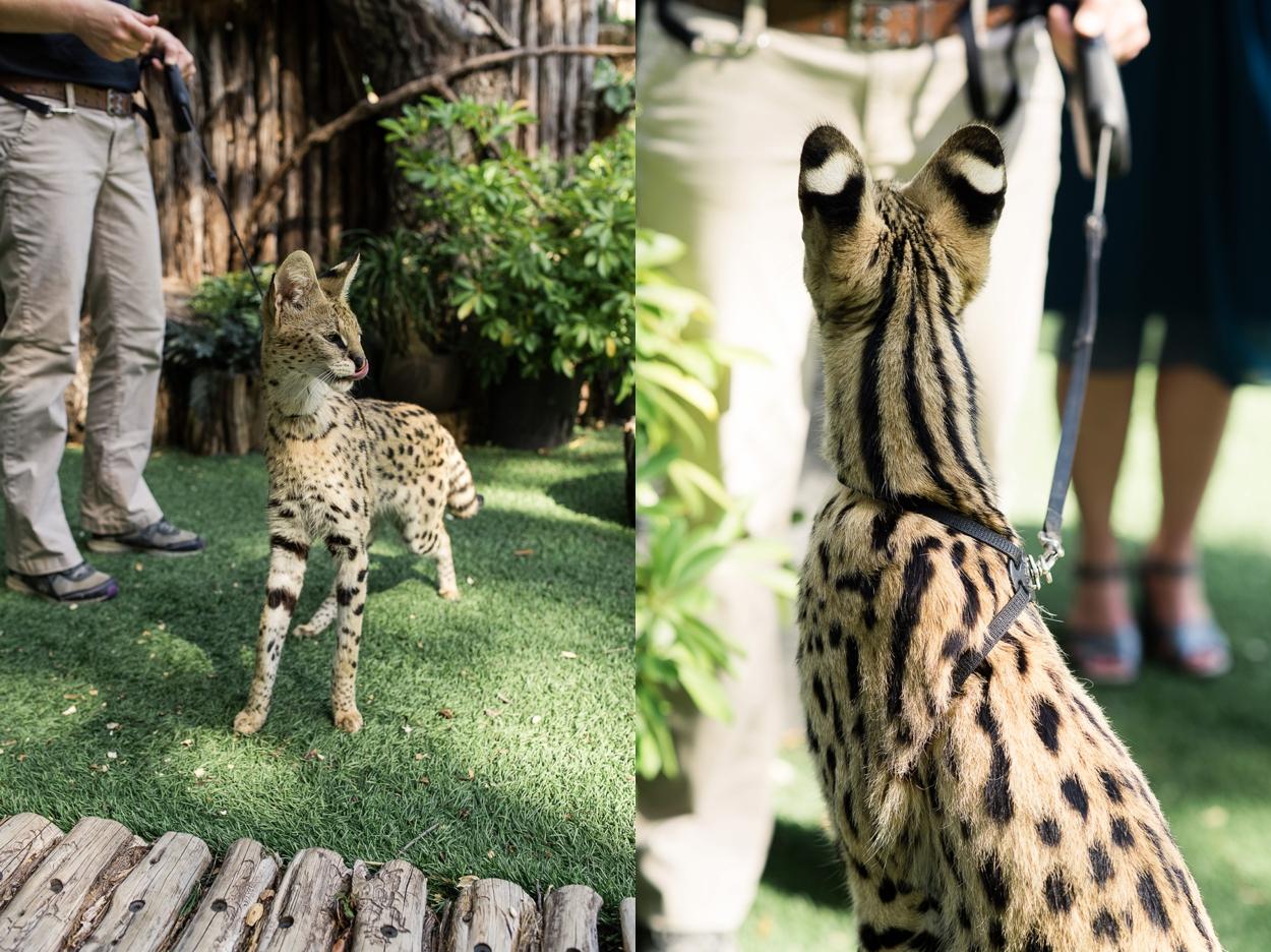 dallas-zoo-wedding_0245.jpg