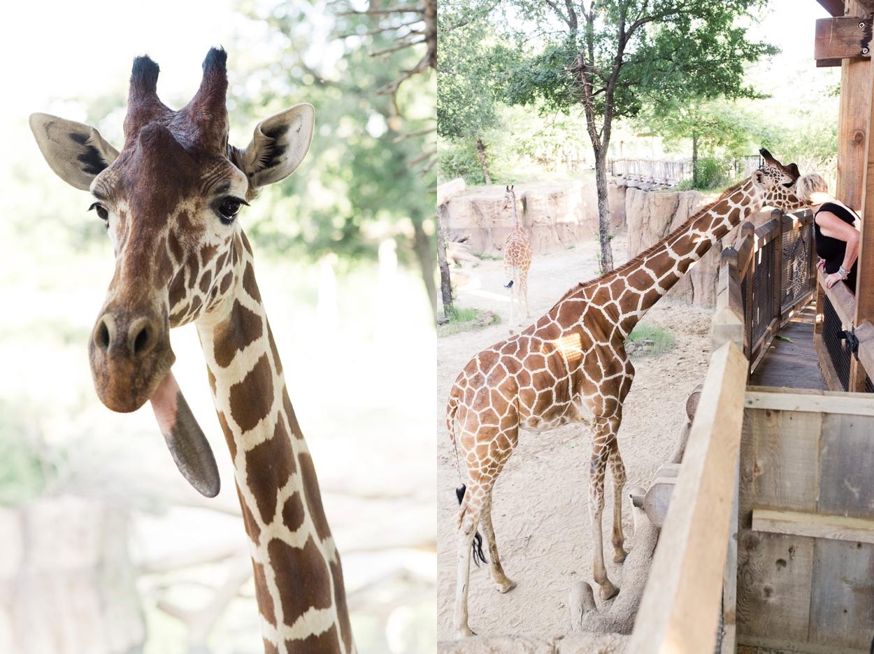 dallas-zoo-wedding_0261.jpg